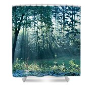 Ashenvale Forest Shower Curtain