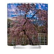 Asian Cherry In Blossom Shower Curtain