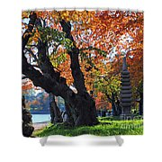 Asian Cherry Trees Of Fall Shower Curtain