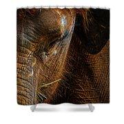 Asian Elephant Closeup Portrait Shower Curtain