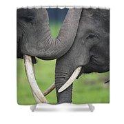 Asian Elephant Greeting Shower Curtain