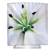 Asian Lilly I I Shower Curtain