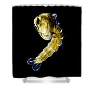 Asian Tiger Mosquito Pupa Shower Curtain