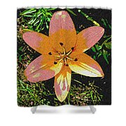 Asiatic Lily With Sandstone Texture Shower Curtain