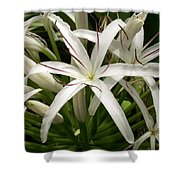 Asiatic Poison Lily Shower Curtain