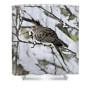 Asleep In The Snow - Mourning Dove Portrait Shower Curtain