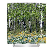 Aspen And Balsam Root Shower Curtain