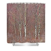 Aspen And Buckbrush Shower Curtain