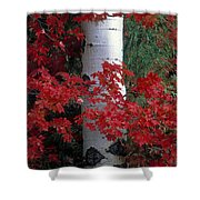 Aspen And Mountain Maple Shower Curtain