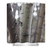 Aspen Bark Detail Shower Curtain