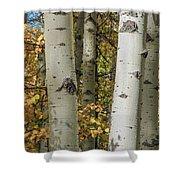 Aspen Bark Shower Curtain