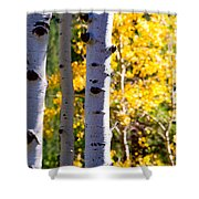 Aspen Color Shower Curtain