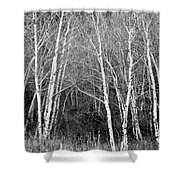 Aspen Forest Black And White Print Shower Curtain