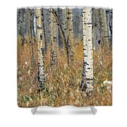 Aspen Forest, Mountain View County Shower Curtain