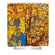Aspen Glow Autumn Sky Shower Curtain