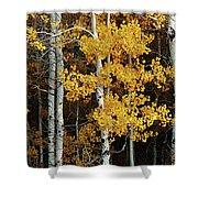 Aspen Gold Shower Curtain