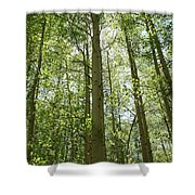 Aspen Green Shower Curtain