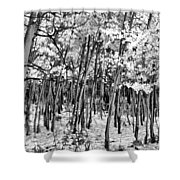 Aspen In Snow Black And White Shower Curtain