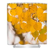 Aspen Leaves Shower Curtain by James BO  Insogna