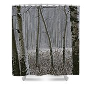 Aspen Stand In A Snowstorm Shower Curtain