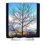 Aspen Tree At Sunset Shower Curtain