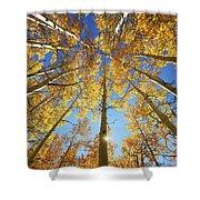 Aspen Tree Canopy 2 Shower Curtain