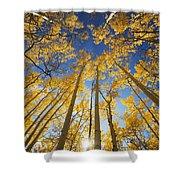 Aspen Tree Canopy 3 Shower Curtain