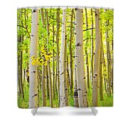 Aspen Tree Forest Autumn Time Portrait Shower Curtain