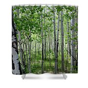 Aspen Trees Colorado Shower Curtain