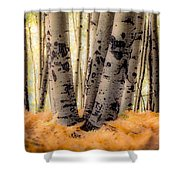 Aspen Trees With Ferns Shower Curtain