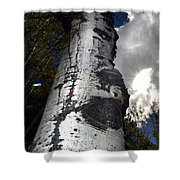 Aspens And A Cool Breeze Shower Curtain