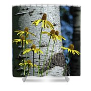 Aspens And Arnicas Shower Curtain