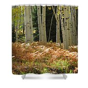 Aspens And Ferns Shower Curtain