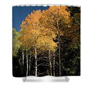 Aspens And Sky Shower Curtain