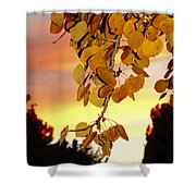 Aspens At Sunset Shower Curtain