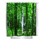 Aspens At The Chanticleer Shower Curtain