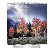 Aspens In Autumn Light Shower Curtain