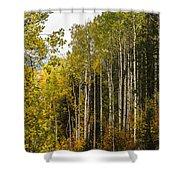 Aspens In Autumn Shower Curtain
