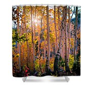 Aspens In Fall Color Shower Curtain