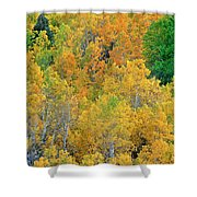 Aspens In Fall Eastern Sierras California Shower Curtain
