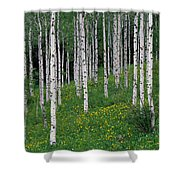 Aspens In Spring Shower Curtain