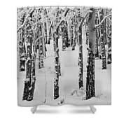 Aspens In Winter Shower Curtain
