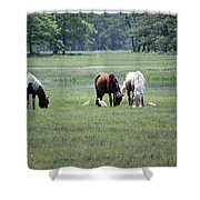 Assateague Island - Wild Ponies And Their Buddies  Shower Curtain