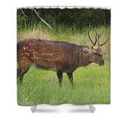 Assateague Sitka Deer Shower Curtain