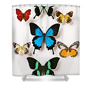 Assorted Butterflies Shower Curtain