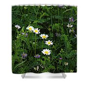 Aster And Daisies Shower Curtain