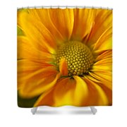 Aster Close Up Shower Curtain