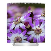 Aster Delights Shower Curtain