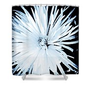 Aster In Black And White Shower Curtain