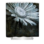 Aster On Rock Shower Curtain